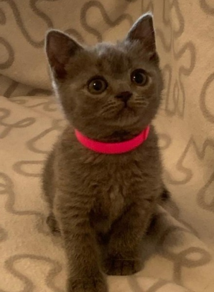 DORIS-BLUE-GIRL-PINK-COLLAR