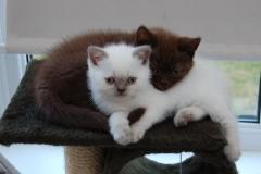 KITTENS 27-28-29-07-2008 007