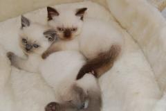 MORE KITTENS 27-08-2008 004