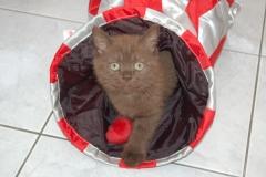 kittens 18-07-2008 009
