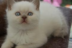 kittens 18-07-2008 037