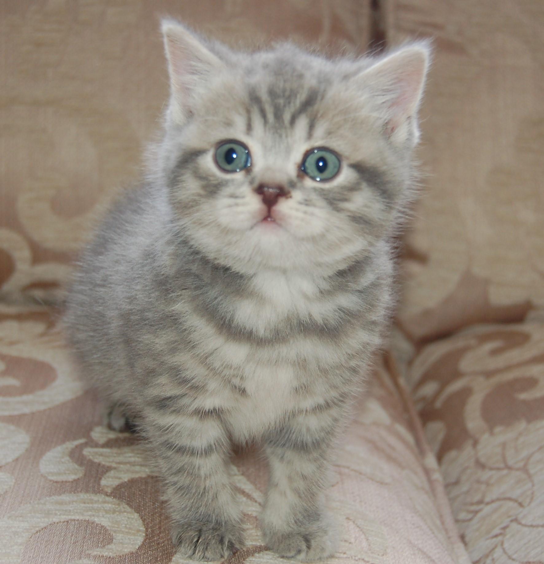 Cranham Catz Essex Cat Breeders